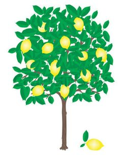 242a39434c1fcbdc5c40616fb57a2e6b--lemon-orchards.jpg