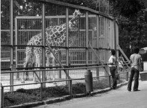 FFkep regi Zoo225