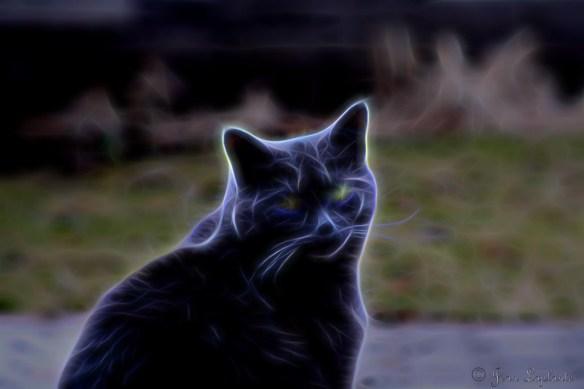 astral cat.jpg
