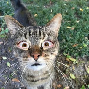surprised cat 2