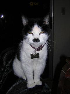 Hitler Cat.jpg