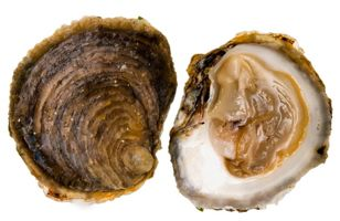 raw-oysters-norovirus-featured.jpg