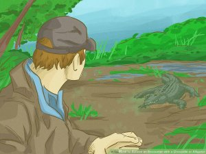 Survive-an-Encounter-with-a-Crocodile-or-Alligator-Step-13