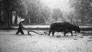 Asia agriculture rain