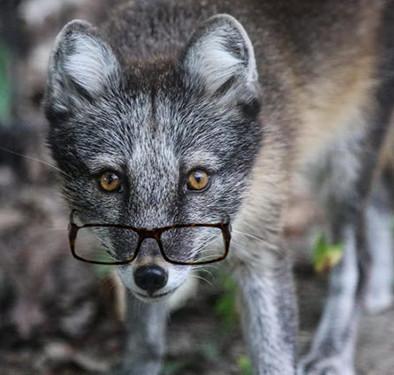 Schumer Fox.jpg