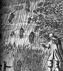 rainingrats