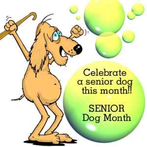 Senior Dog month