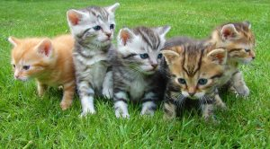 pack of kittens