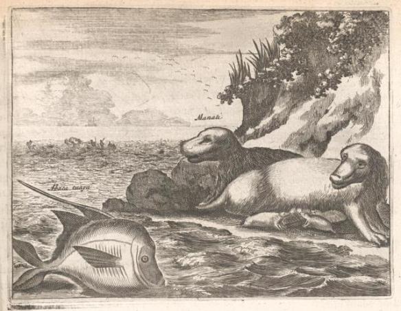 beasts-peculiar-to-hispaniola-e84c98-640